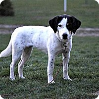 Adopt A Pet :: Zoe - Grand Rapids, MI