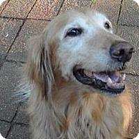 Adopt A Pet :: Zoey - St Louis, MO