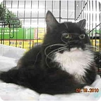 Adopt A Pet :: Princess P - Riverside, RI