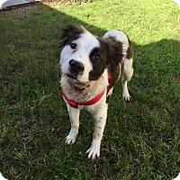 Adopt A Pet :: Buddy - Lufkin, TX
