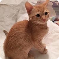 Adopt A Pet :: MojiA - North Highlands, CA