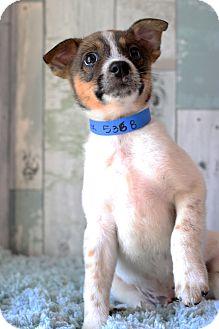 Beagle Mix Puppy for adoption in Waldorf, Maryland - Mavrick- Adoption Pending