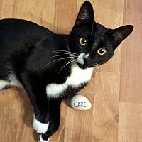 Adopt A Pet :: Kitty - West Palm Beach, FL