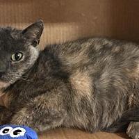Adopt A Pet :: Rachel - Furlong, PA