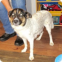 Adopt A Pet :: 17-d06-010 Ali - Fayetteville, TN