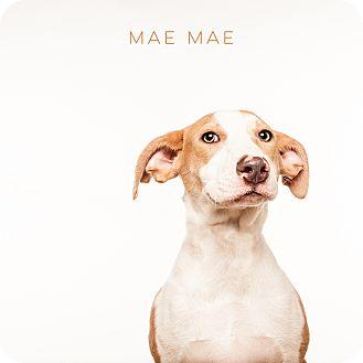 Hound (Unknown Type) Mix Dog for adoption in Boston, Massachusetts - MaeMae