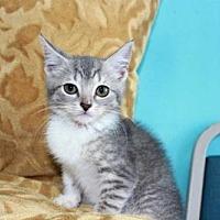 Adopt A Pet :: BUTTERCUP - Salem, NH