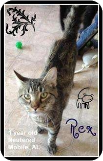 Domestic Shorthair Cat for adoption in Mobile, Alabama - Rex