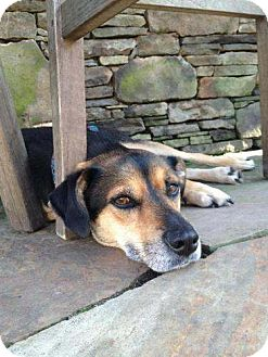 Shepherd (Unknown Type) Mix Dog for adoption in Pompton Lakes, New Jersey - Ginger