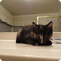 Adopt A Pet :: KAY - Phoenix, AZ