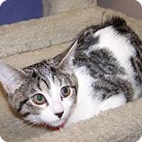 Adopt A Pet :: K-Psyche3-Nonee - Colorado Springs, CO