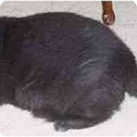 Adopt A Pet :: Shirley - Simms, TX