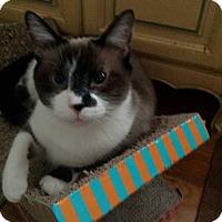 Adopt A Pet :: Stanley - Columbus, OH