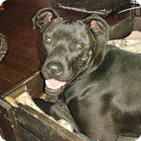Adopt A Pet :: Gracie - Northumberland, ON