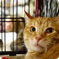 Adopt A Pet :: Malcolm - College Station, TX