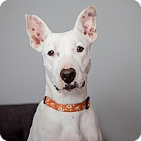 Adopt A Pet :: Ellie - Mission Hills, CA