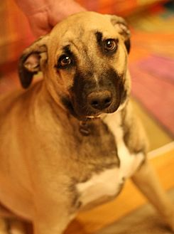 German Shepherd Dog Mix Dog for adoption in Lyles, Tennessee - Penny