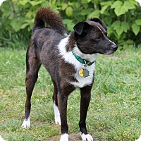 Adopt A Pet :: BUDDY-ADOPTED!! - Lynnwood, WA