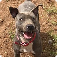 Adopt A Pet :: JENNY - Studio City, CA