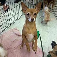 Adopt A Pet :: KIMI-13 - Lithia, FL