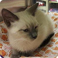 Adopt A Pet :: Snickers - Fullerton, CA