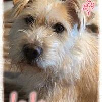 Adopt A Pet :: Lala - Valley Stream, NY