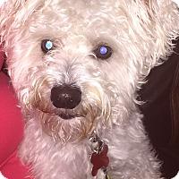 Adopt A Pet :: JOEY - Frisco, TX
