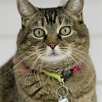 Adopt A Pet :: Riffraff - Atascadero, CA