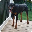 Adopt A Pet :: Rex (COURTESY POST)