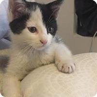 Adopt A Pet :: Pandi - New York, NY