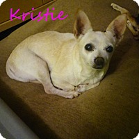 Adopt A Pet :: Kristie - House Springs, MO