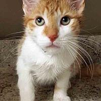Adopt A Pet :: George - Plainfield, IL