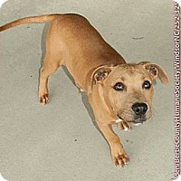 Adopt A Pet :: Simon - Washington, NC