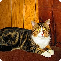 Adopt A Pet :: Tazz - Linton, IN