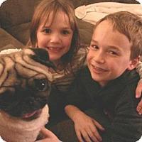 Adopt A Pet :: Arwin - Sacramento, CA