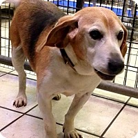 Adopt A Pet :: BILLY - Coudersport, PA