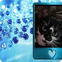 Adopt A Pet :: Spud - london, ON