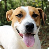 Adopt A Pet :: Lily - The Woodlands, TX