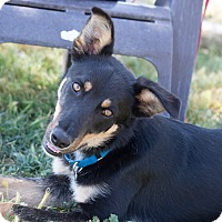 Adopt A Pet :: Ian - Patterson, CA
