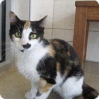 Adopt A Pet :: Gracie  $25 to adopt - North Richland Hills, TX