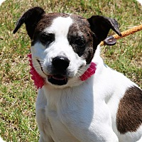 Adopt A Pet :: Claire - Lacey, WA