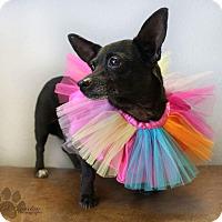 Adopt A Pet :: Millie - Yukon, OK