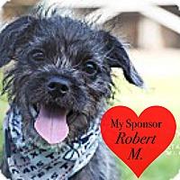 Adopt A Pet :: Chewey - San Leon, TX
