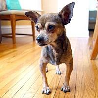 Adopt A Pet :: Widget - St. Louis Park, MN