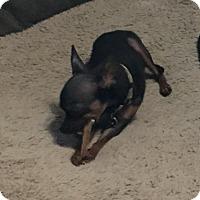 Adopt A Pet :: Sundae - Chico, CA