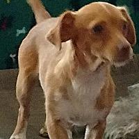Adopt A Pet :: Pina - San Diego, CA