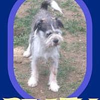 Adopt A Pet :: PEATY - Halifax, NS