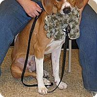 Adopt A Pet :: Ricky - Iroquois, IL