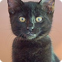 Adopt A Pet :: Pansy - Victor, NY