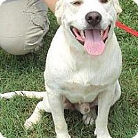 Adopt A Pet :: Max - Wedowee, AL